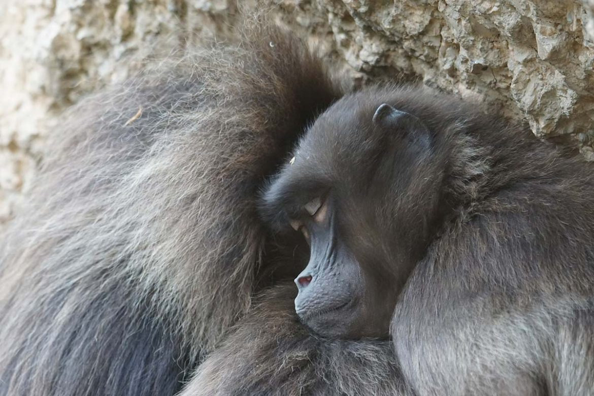 New Study Reveals How Growing Demand for Agricultural Products Are Threatening Primates